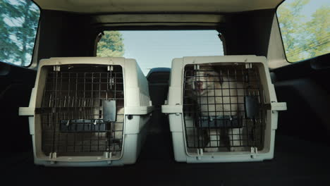 Two-Cages-For-The-Transport-Of-Animals-In-The-Trunk-Of-The-Car-The-Car-Carries-Two-Cages-With-Puppie