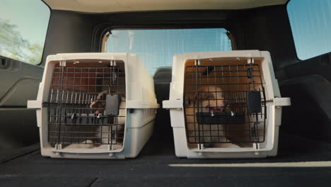 Moving-With-Animals-Two-Cages-With-Puppies-In-The-Trunk-Of-A-Car-That-Rides-Pet-Transportation