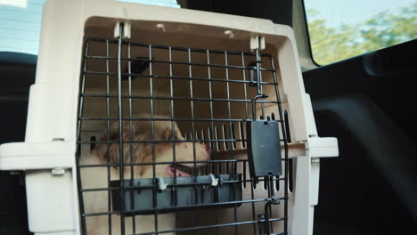 One-Cage-With-Puppy-In-The-Trunk-Of-An-Suv-Transportation-And-Delivery-Of-Pets