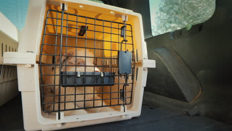 Cage-With-A-Puppy-Rides-In-The-Trunk-Of-The-Car-Transportation-And-Delivery-Of-Live-Animals