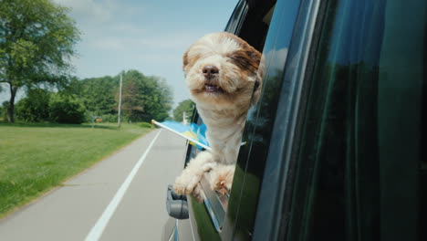 A-Dog-With-A-Swedish-Flag-Looks-Out-Of-A-Car-Window-Scandinavian-Travel