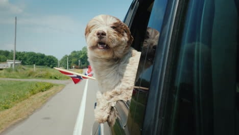Road-Trip-In-Norway-With-A-Pet-A-Dog-Looks-Out-Of-A-Car-Window-Next-To-It-Is-The-Flag-Of-Norway