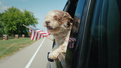 A-Dog-With-An-Owner-Travels-Around-America-Looks-Out-Of-The-Window-With-The-Flag-Of-The-Usa