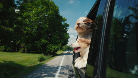 Summer-Road-Trip-In-America-Two-Cute-Dogs-Peek-Out-Of-A-Car-Window