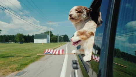 A-Pair-Of-Funny-Dogs-With-The-Flag-Of-The-United-States-Look-Out-The-Window-Of-A-Moving-Car