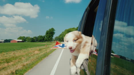 The-Dog-Looks-Out-The-Window-Of-The-Car-In-The-Paws-Of-Her-Flag-Of-Norway-Travel-To-The-Countries-Of