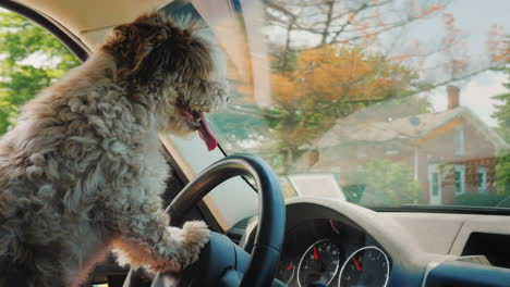 A-Focused-Dog-Driver-Driving-A-Car-Drives-Through-The-Us-Suburbs