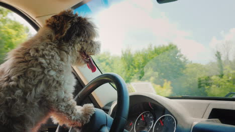Cute-Puppy-Driver-Is-Driving-A-Car-Dog-Driver-And-Funny-Video-With-Animals