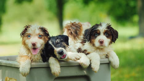 Funny-Puppies-Are-Wet-In-The-Rain-Peeking-Out-Of-The-Basket