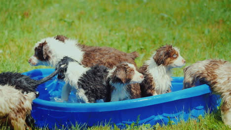 Several-Puppies-Scatter-Away-From-A-Small-Pool-On-The-Lawn