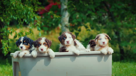Group-Portrait-Of-A-Canine-Family-After-Bathing-A-Few-Wet-Puppies-Peep-Out-Of-The-Bath