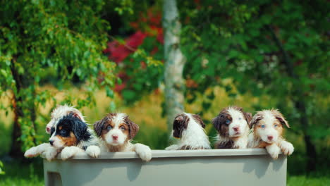 A-Few-Funny-Puppies-Are-Taking-A-Bath-In-A-Picturesque-Place