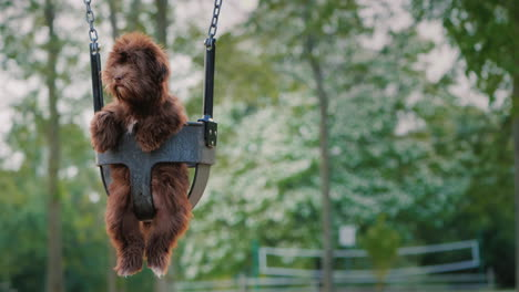 Funny-Dog-Riding-On-A-Swing-For-The-Kids-On-The-Playground