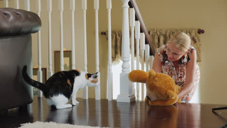 A-Woman-Plays-With-A-Cat-Shows-A-Cat-A-Teddy-Bear-The-Cat-Is-Afraid-Of-Toys-Funny-Pet-Videos