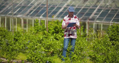 Confident-Male-Farm-Researcher-Examining-And-Tasting-Blueberry-On-Field-3
