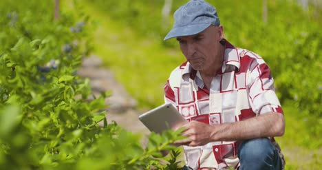 Confident-Male-Farm-Researcher-Examining-And-Tasting-Blueberry-On-Field-13