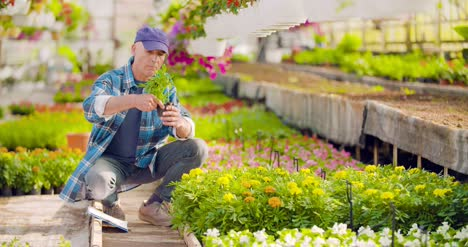 Researcher-Examining-Potted-Plant-At-Greenhouse-28