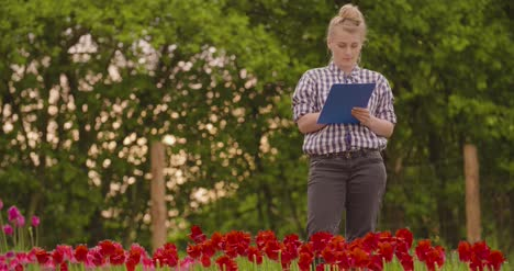 Female-Researcher-Walking-While-Examining-Tulips-At-Field-19