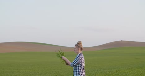 Female-Researcher-Examining-Crop-At-Field-1