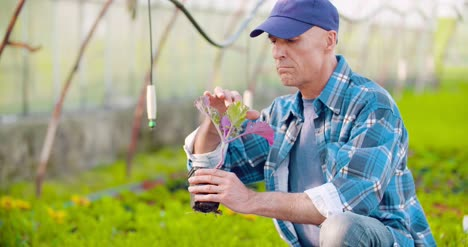 Researcher-Examining-Potted-Plant-At-Greenhouse-33