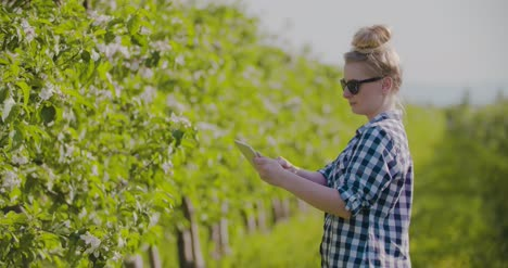 Agronomist-Or-Farmer-Examining-Blossom-Branch-In-Orchard-7