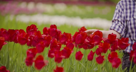 Female-Researcher-Walking-While-Examining-Tulips-At-Field-26
