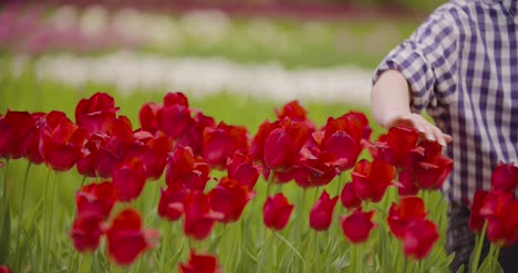Female-Researcher-Walking-While-Examining-Tulips-At-Field-27