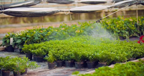 Pesticide-Sprayed-On-Flowering-Plants-At-Greenhouse-12