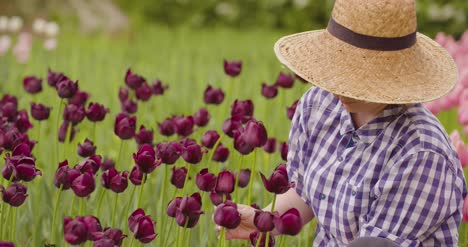 Female-Researcher-Walking-While-Examining-Tulips-At-Field-29