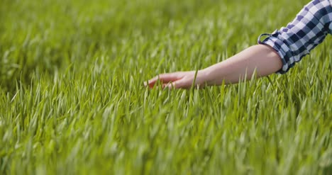 Agriculture-Woman-Hand-Touching-Wheat-Crops-At-Farm-1