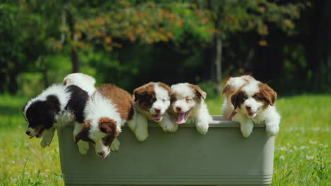 A-Group-Of-Little-Puppies-Jump-Out-Of-The-Basket