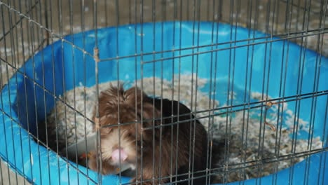 A-Small-Dog-Is-Sitting-In-A-Cage-Transportation-And-Quarantine-Of-Animals