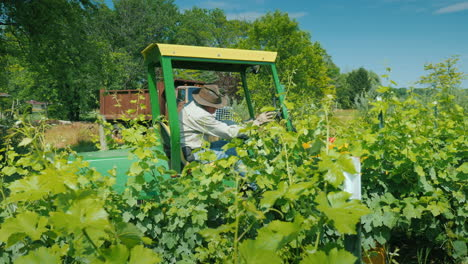 Germer-On-A-Small-Tractor-With-Additional-Equipment-Processes-The-Vine-Of-The-Grapes-With-Herbicides