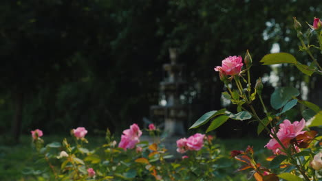 Old-Fountain-In-The-Garden-And-Roses-In-The-Foreground