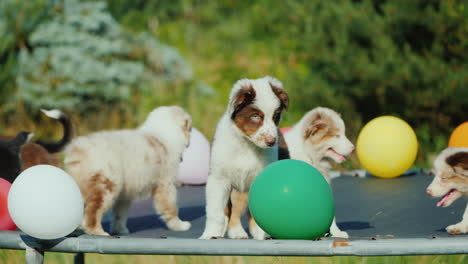 Group-Of-Puppies-Playing-With-Balloons-Dog-Party