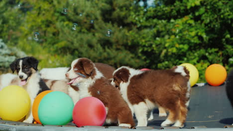 Having-Fun-With-Pets---Dogs-Run-Around-A-Trampoline-Near-Balloons-Soap-Bubbles-Fly-Around-Them