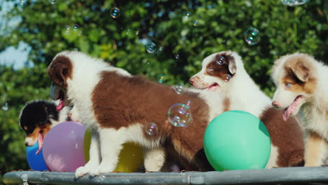 Puppies-Having-Fun-With-Balloons-Outdoors