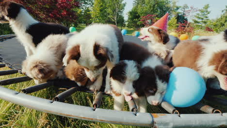Party-Of-Little-Funny-Puppies-Group-Of-Pets-With-Balls-And-Caps