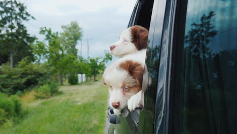 Two-Funny-Dogs-Peek-Out-Of-A-Car-Window-Traveling-Pets