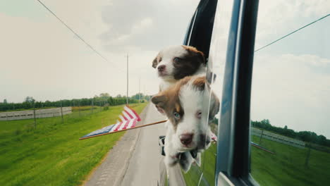 Dogs-With-The-Us-Flag-Go-To-The-Independence-Day-Party-Peek-Out-The-Car-Window