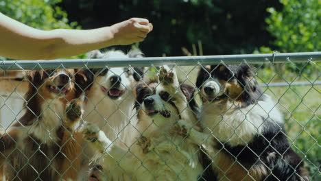 The-Owner-Treats-His-Dogs-In-The-Aviary-With-A-Delicious-Treat