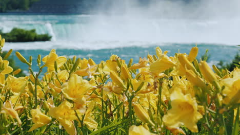 Niagara-Falls-With-Yellow-Flowers-In-The-Foreground-Nature-And-Sights-Of-America