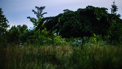 Glowing-In-The-Dark-Insects---Fireflies-Fly-Over-The-Meadow-Night-Video