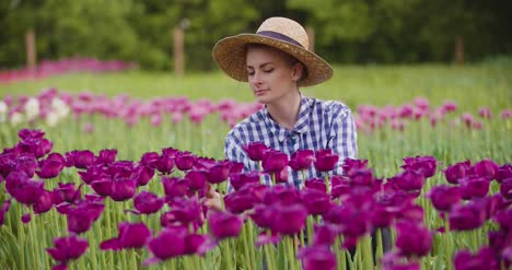 Hands-Checking-Purple-Tulip-Petals-At-Farm-1