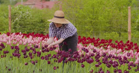 Female-Researcher-Walking-While-Examining-Tulips-At-Field-40