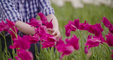 Female-Researcher-Walking-While-Examining-Tulips-At-Field-52