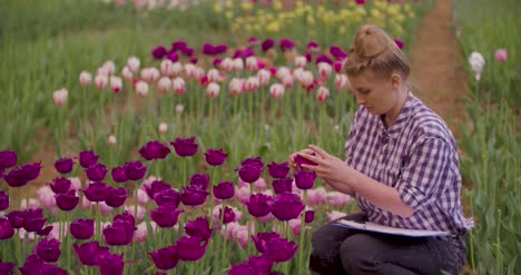 Female-Researcher-Walking-While-Examining-Tulips-At-Field-53