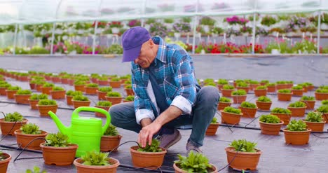 Farmer-Examining-Plants-On-Farm-1