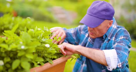 Farmer-Examining-Plants-On-Farm-3