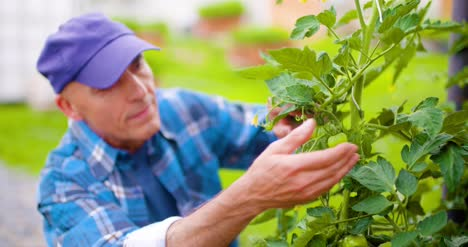 Farmer-Examining-Plants-On-Farm-5